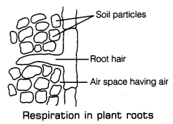 Respiration in Organisms Class 7 Notes Science Chapter 10 6