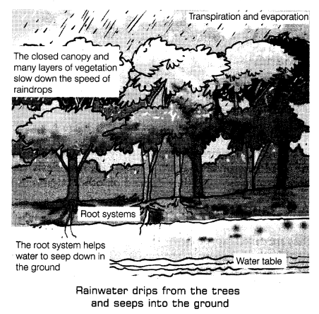 Forests Our Lifeline Class 7 Notes Science Chapter 17 2