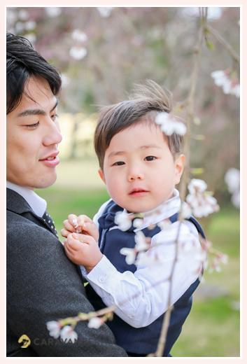 桜の花と男の子、パパ