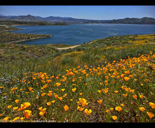 gorgeous diamondvalleylake wildflowers mountain countryside california flowers colorful travel landmark spring landscape usa outdoor nature blossom wildflower rural unitedstates lake poppy water nopeople natural photography beautiful