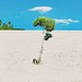 Single Tree by paaddor