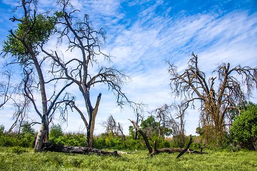visalia california nikon d750 kaweahoakspreserve