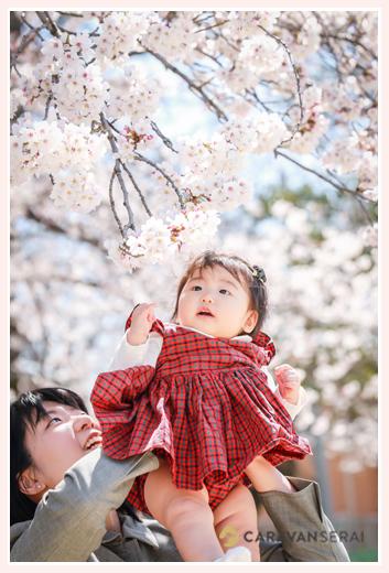 満開の桜(ソメイヨシノ)と赤ちゃんの女の子