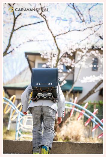 ランドセルを背負う新一年生の男の子の後ろ姿 桜