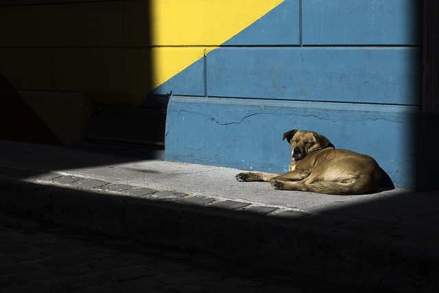 Needed, loving home with place to sunbathe