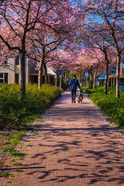 blossom Road