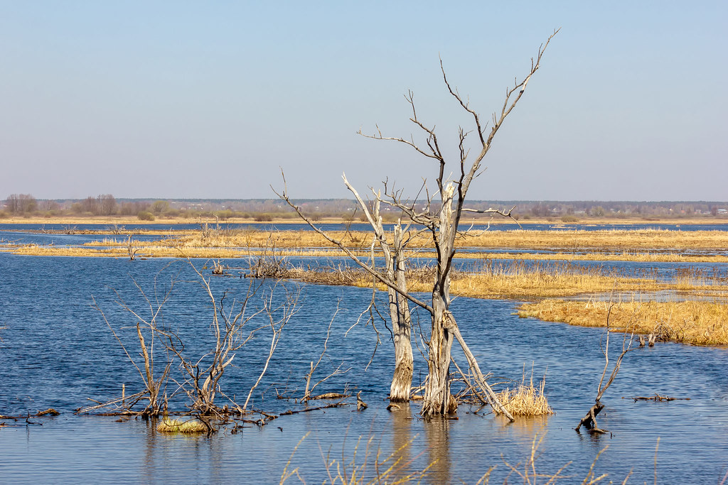 Vinogradovo floodplains of the river Moscow. Russia