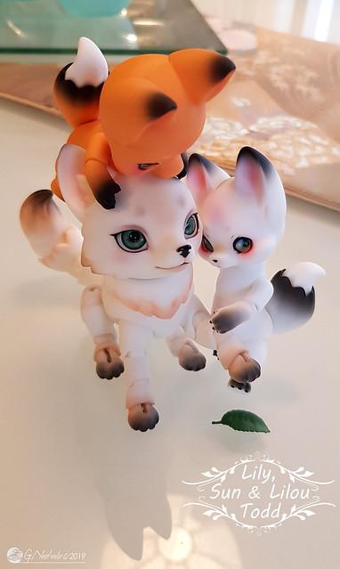 ✰ Ma famille de kitsune (p. 20) - Page 20 33822485958_7ffde28700_z