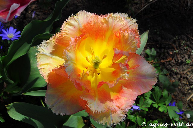 Happy Friday's Flower Power