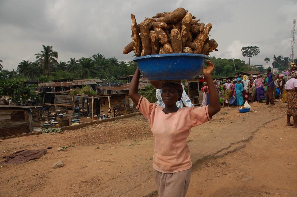 新世界當地的主食——樹薯。