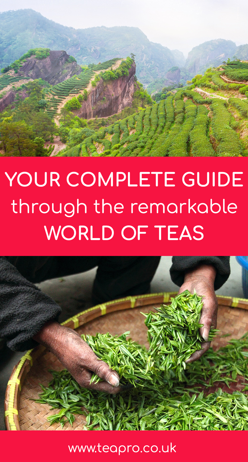 Your Complete Guide Through The Remarkable World of Teas