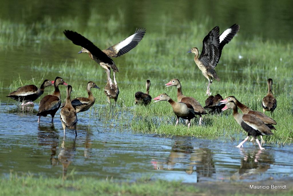 Pantanal - Fazenda Barra Mansa