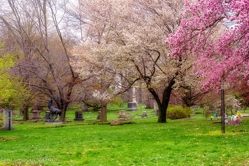 2019 easter ohio spring flowers april cemetery lakeviewcemetery nature outdoors cleveland cuyahogacounty onethousandgifts 1000gifts