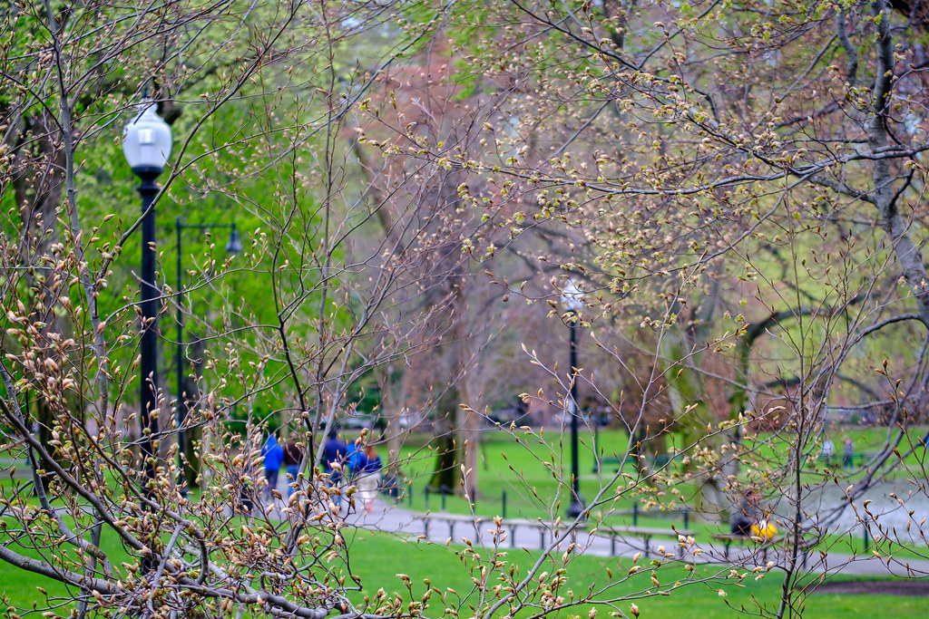 Springtime in the Boston Public Garden