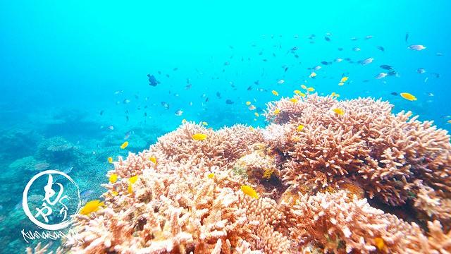 珊瑚キレイな場所にスズメダイがいっぱい♪