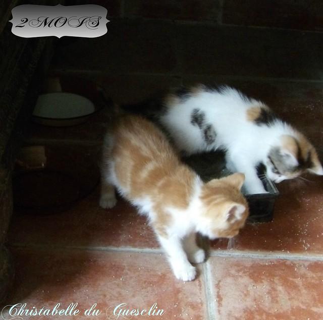 Mes BÉBÉS depuis hier ! ( une chatte ,l'Autre ?)Balou et Choupinette !
