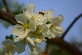 Пасхальное цветение / Easter blossom | by Владимир-61