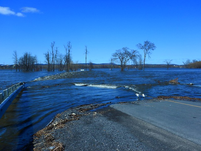 More Water Ottawa River flooding the road to Clarence Island and the Ferry DSCN5738