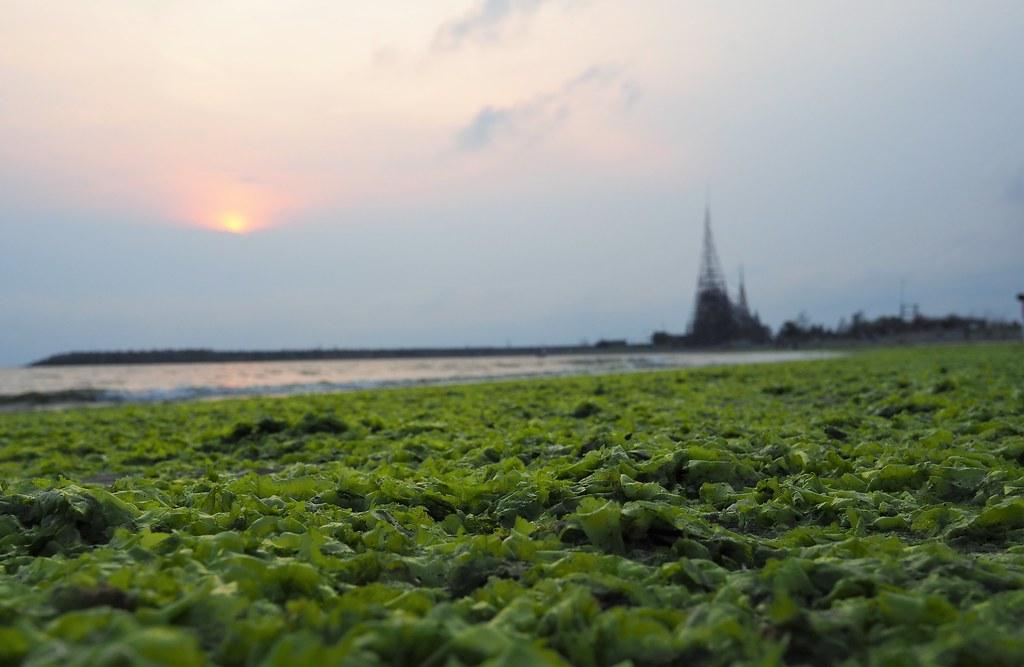 漁光島 (17)