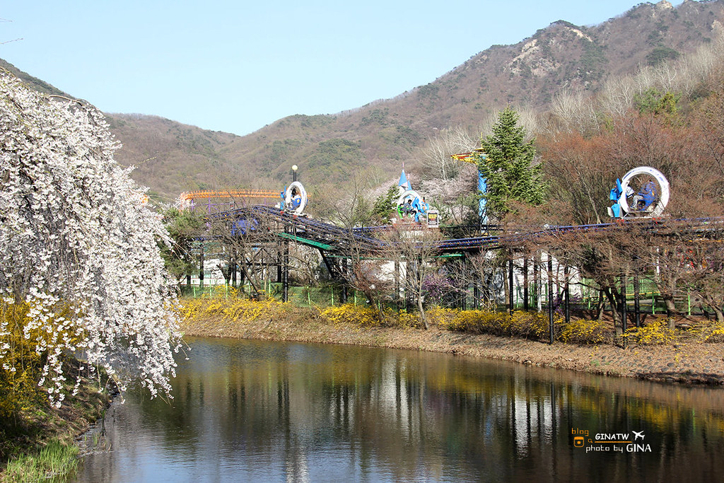 韓國首爾樂園(Seoul Land / 서울랜드)小朋友的天堂 + 春季賞櫻 櫻花大爆開 果川市 @Gina Lin