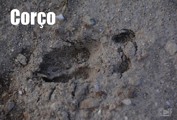 06 _D704740 Corço Blogue