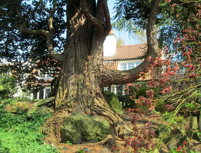 Branklyn Garden
