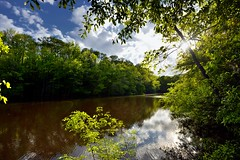 The Calm Waters of Lake Captured Reflections of Colors and Shadows (Congaree National Park)