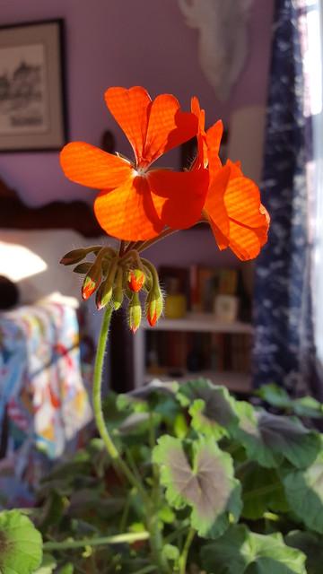 guest room blooms