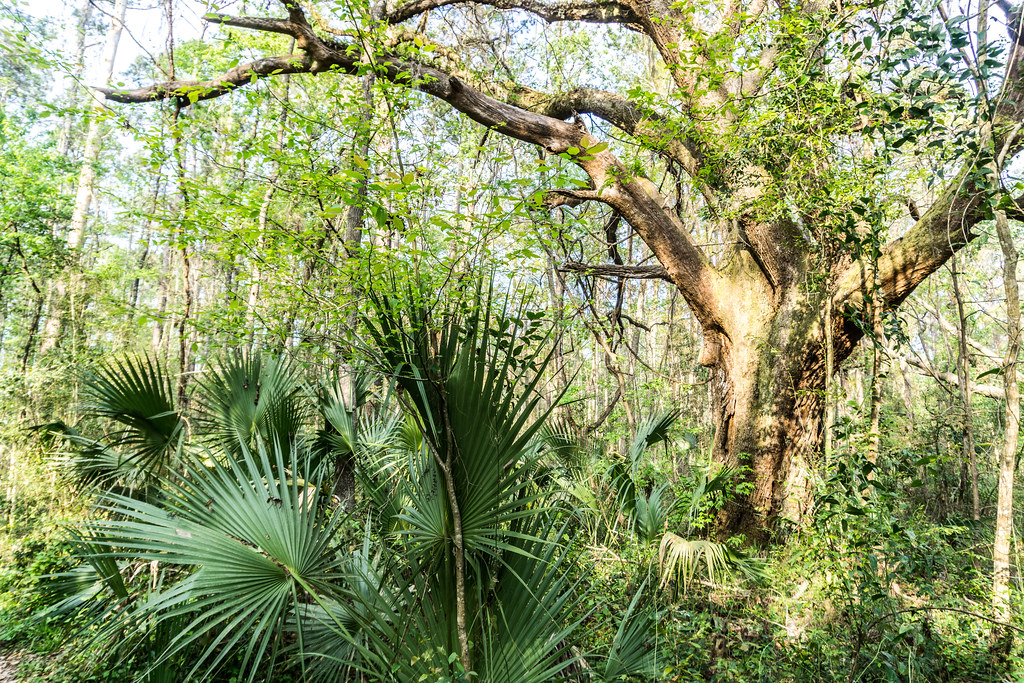 Alfred B. Maclay Gardens State Park, Fla.