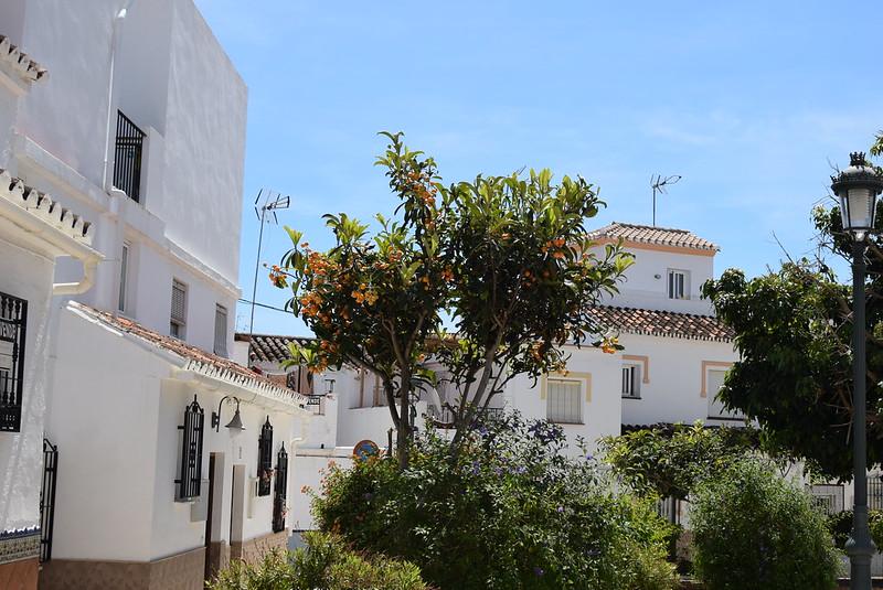 Arboles de nectarina cerca Plaza Andulucia