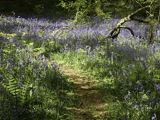 20190430-P1010088 Micheldever Woods Hampshire