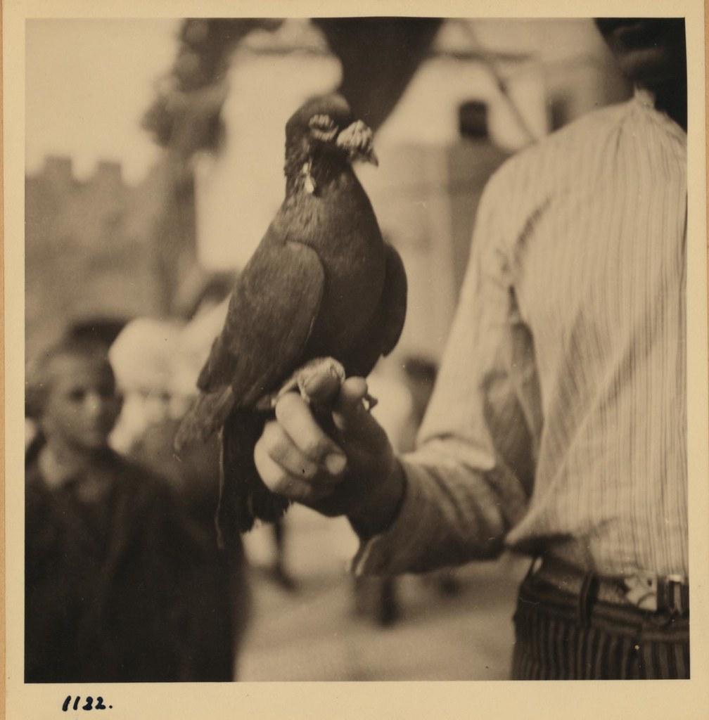 1122. 7 ноября. Торговец голубями