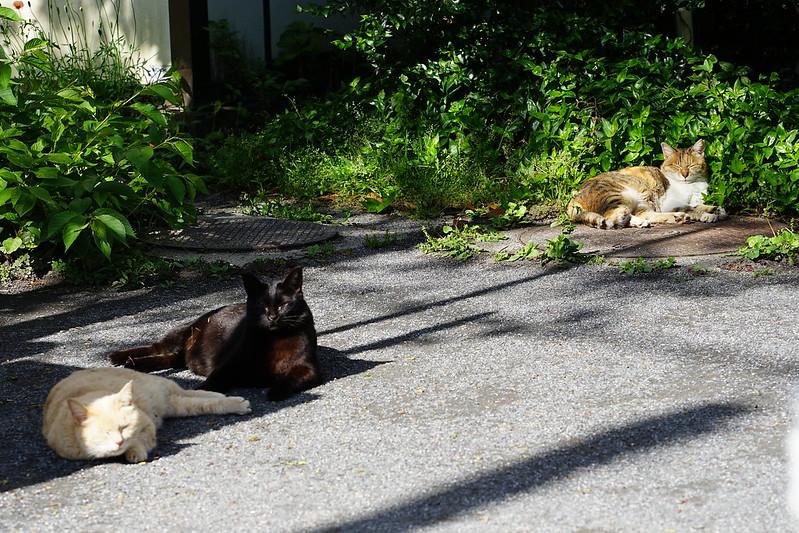 83 池袋一丁目児童遊園の猫