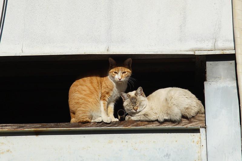 72 南池袋路地の猫