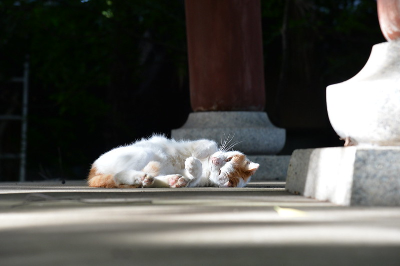 45 南池袋法明寺の猫
