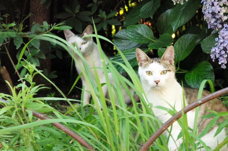 31 池袋本町一丁目児童遊園の猫