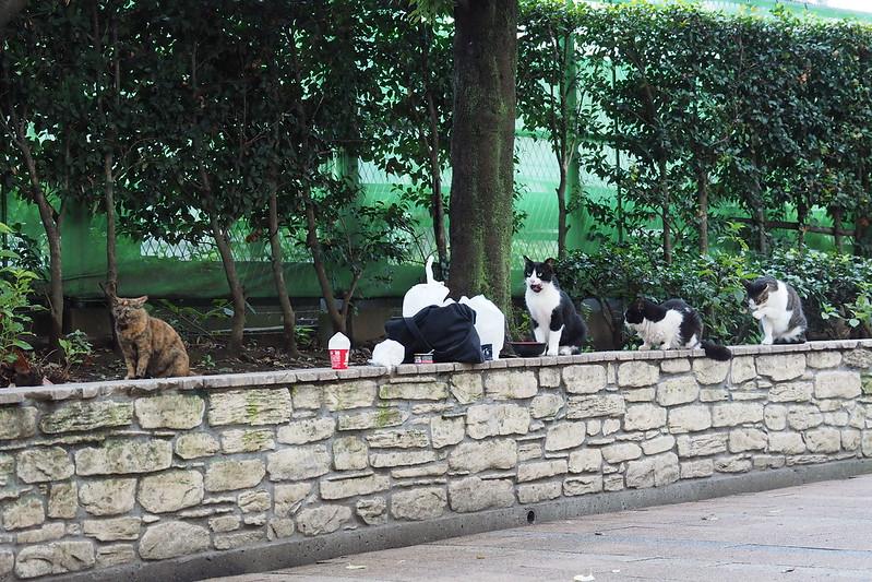 18 池袋駅前公園の猫だまり