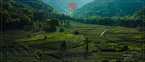 overlook sigmax3 green spring tree farm village mountain china