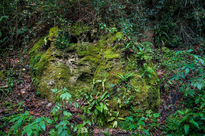 Una roca muy húmeda cubierta de musgo y helechos cerca del Salt del Roure