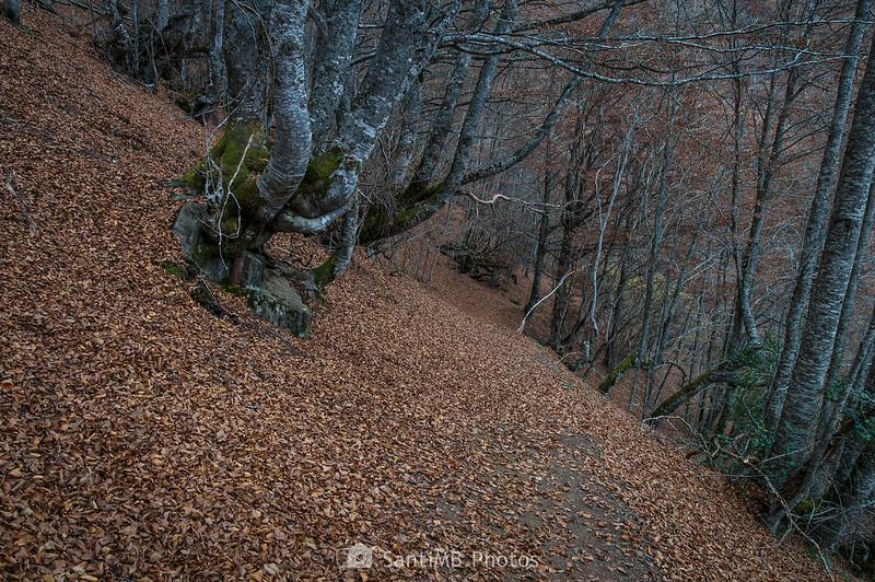 Pendiente en el Bosque Encantado de Carlac