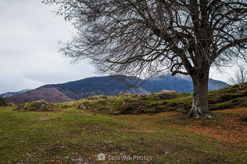 Árbol con columpio frente a Sant Ròc de Bausen