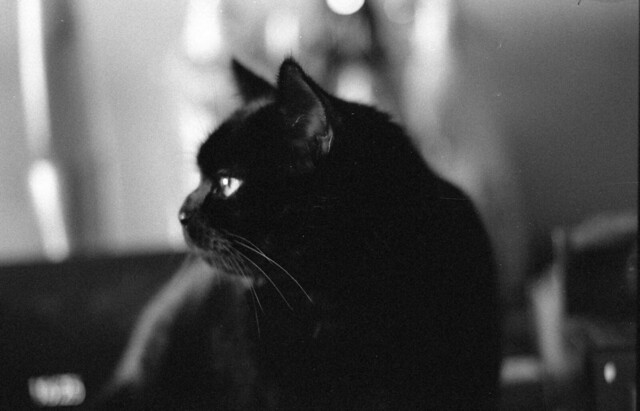 Feline Noir