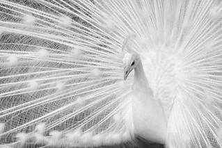 Elegance in white.