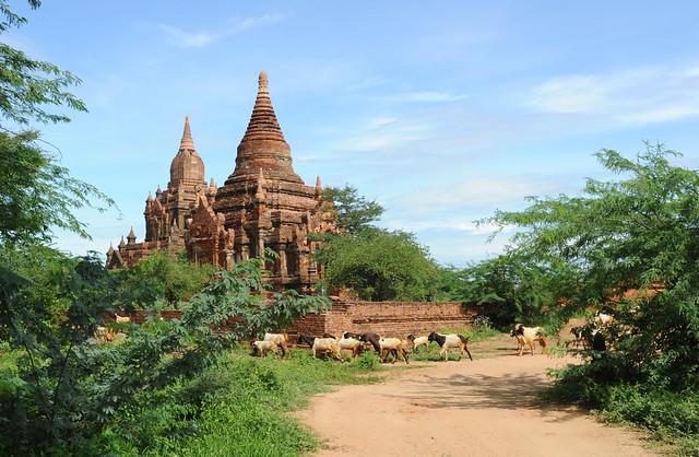 Bagan, Myanmar (Birmania) D700 1604