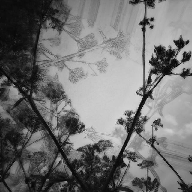 2019:126/365. Flowers in spring