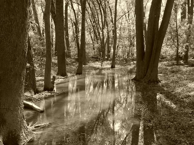 Backside of Holiday Park - Rustic Flood Plane 05052019