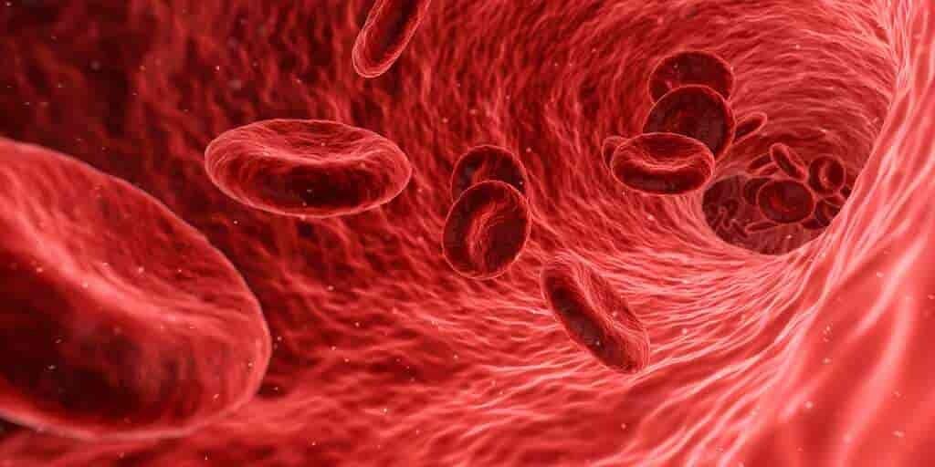 Hémoglobine-évolution-sang-cellules
