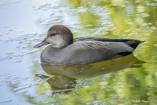 The duck that wears tweed