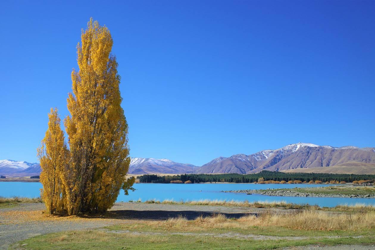 ニュージーランド テカポの紅葉