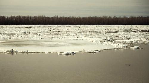 Ice drift on Ob Ледоход на Оби   by kimpapsy